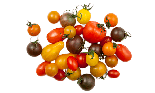 Artisan Series (Specialties) Tomatoes