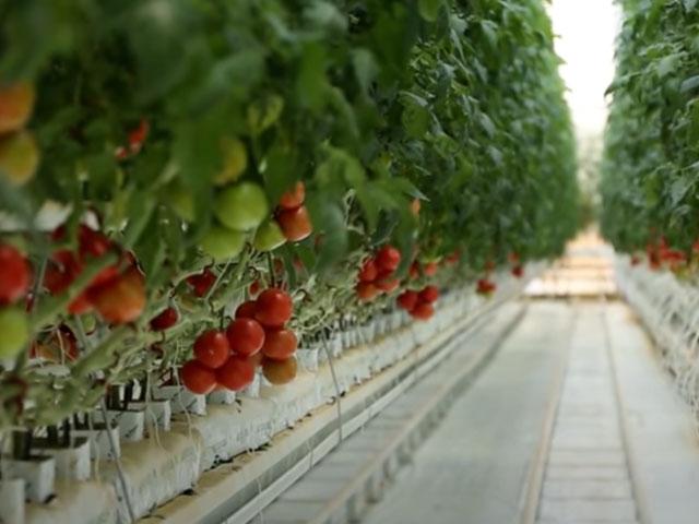 Red Sun Farms Marks a Milestone